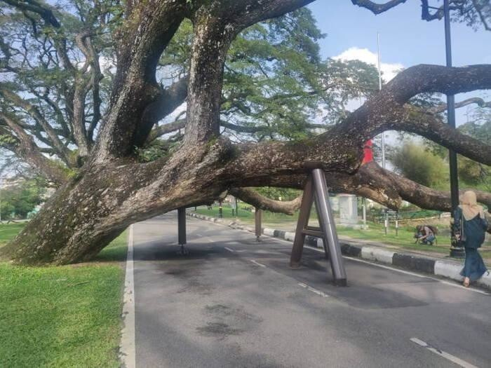 Дерево устало, дерево решило отдохнуть