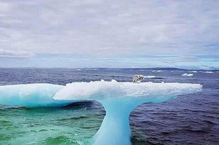 Канадские рыбаки спасли незадачливого пловца на айсбергах