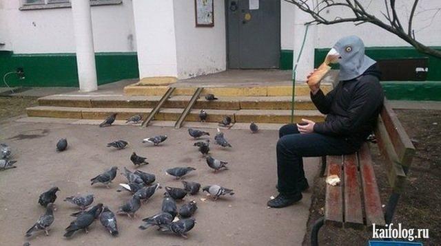 Голубь и голуби