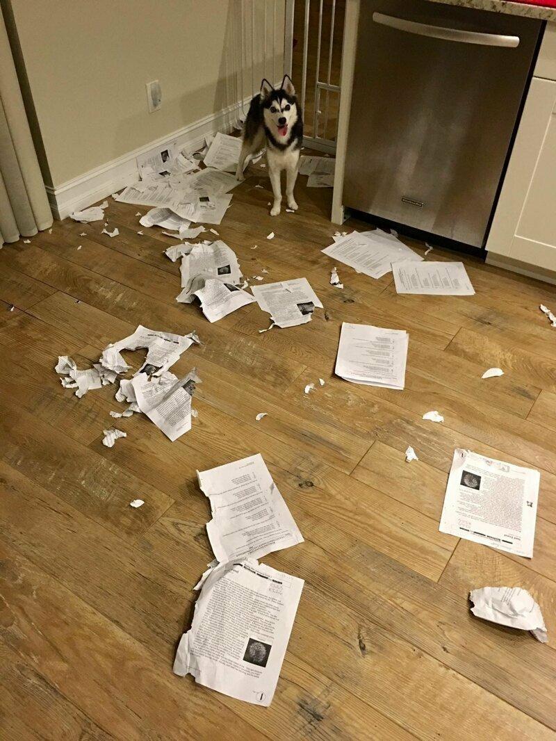 Все еще думаешь, что препод поверит, что собака съела домашку?