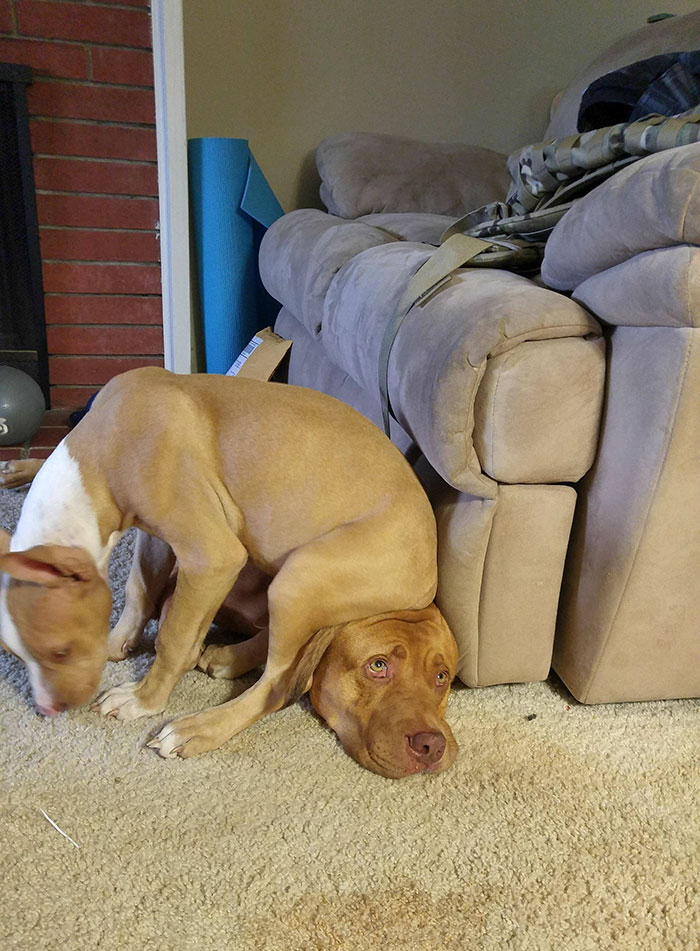 Если под лапой нет подушки...