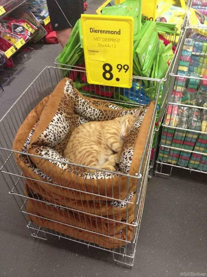 Кот по бросовой цене