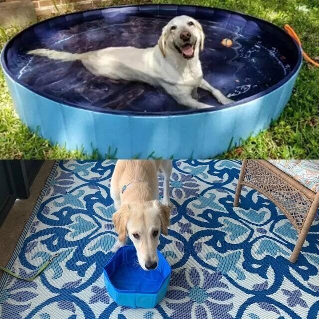 Бассейн для собаки