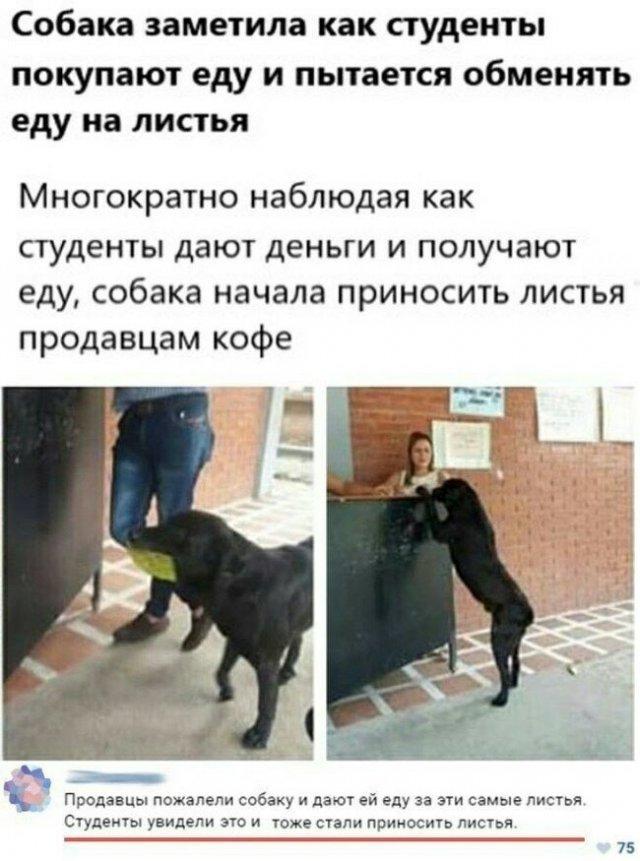 Догадливая собака