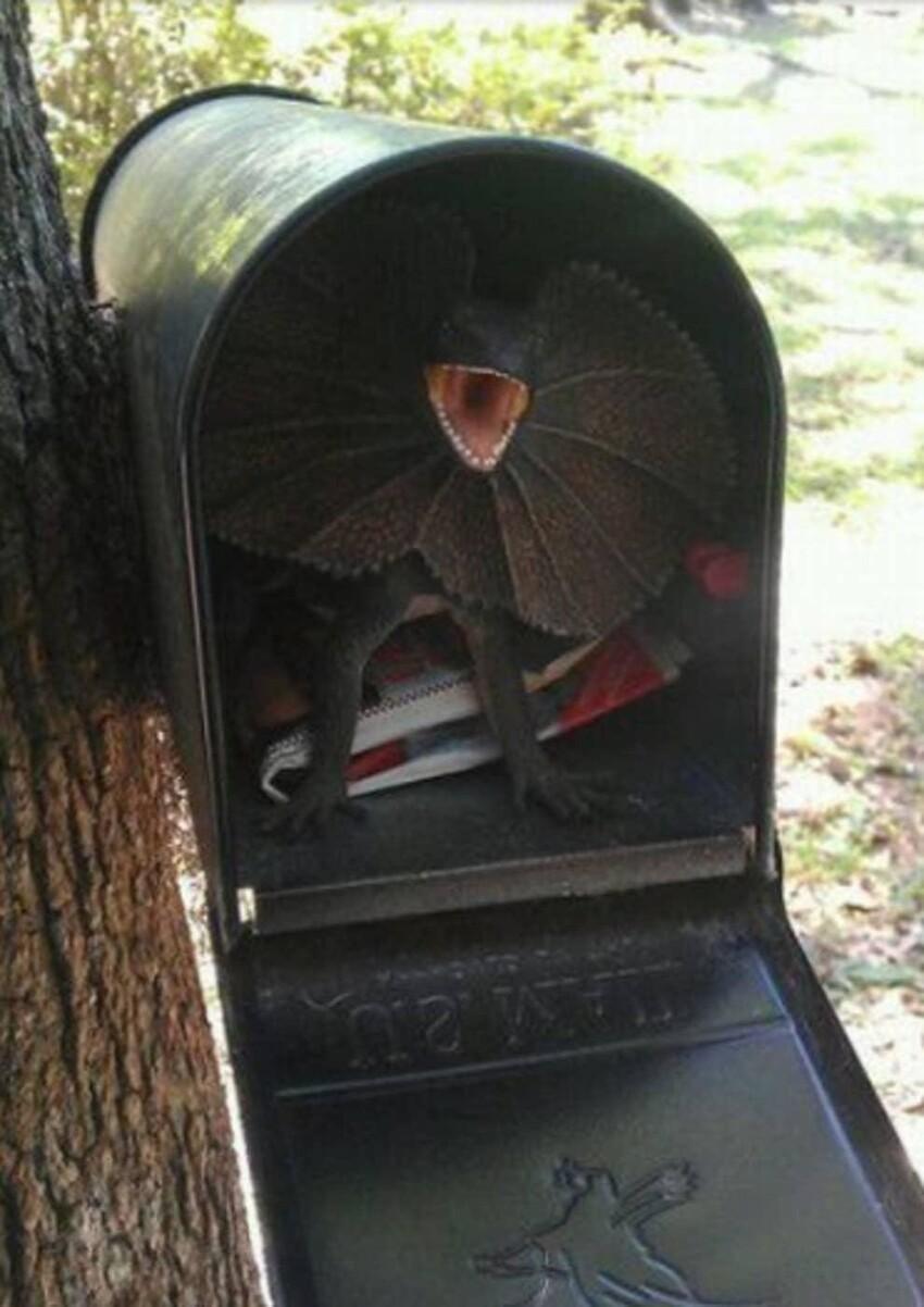 Вот так открыл почтовый ящик и умер