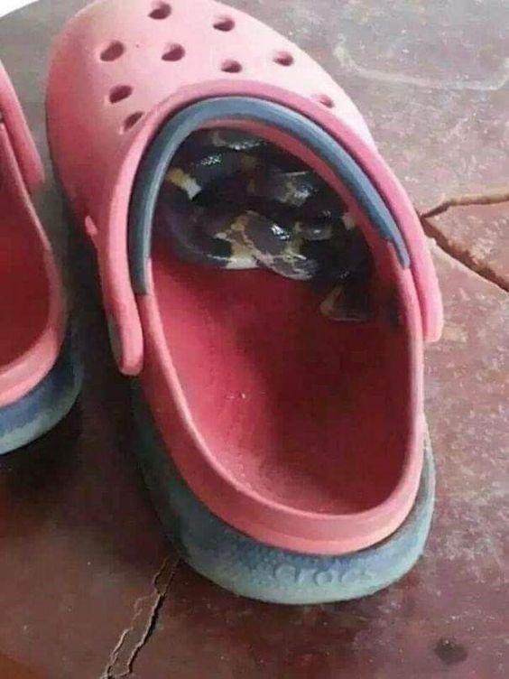 Такое встретить где угодно - в обуви, машине, на заправке - можно не уйти из-за тяжести отложенных кирпичей