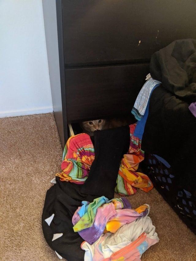 Она выкидывает вещи из комода, чтобы ей ничего не мешало