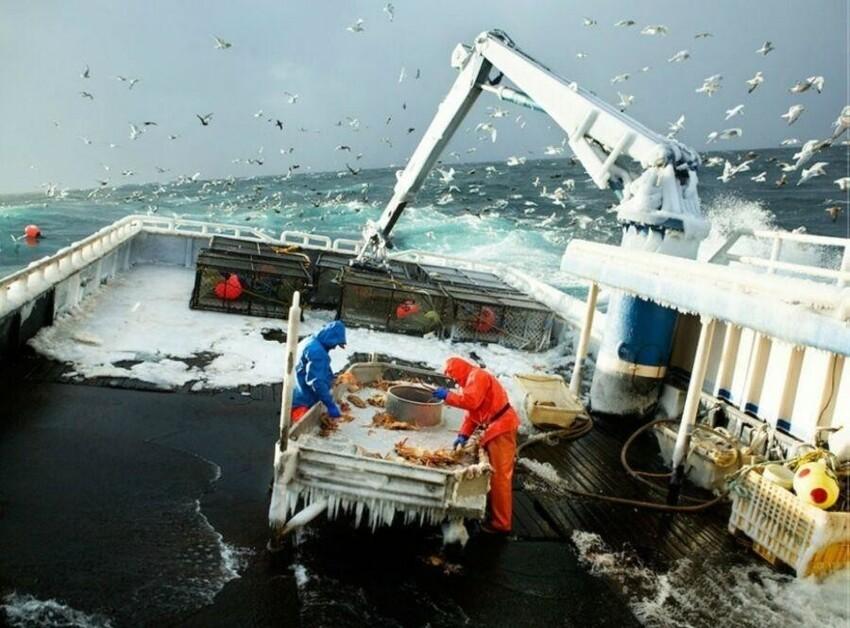 Шторм, холод, вода, опасность всяких сетей - это краболовы в северных морях