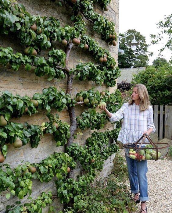 Формирование кроны деревьев (если не жалко фундамент)