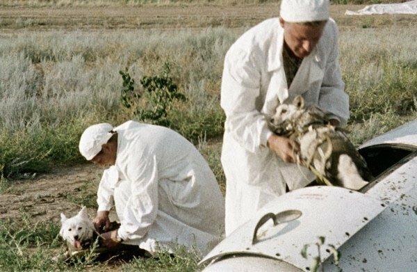 Возвращение на Землю собак Белки и Стрелки 20 августа 1960 года