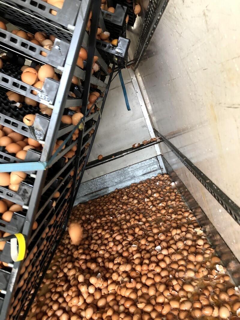 Кто-то перевозил яйца и плохо закрепил ящики. 10 500 яиц - коту под хвост