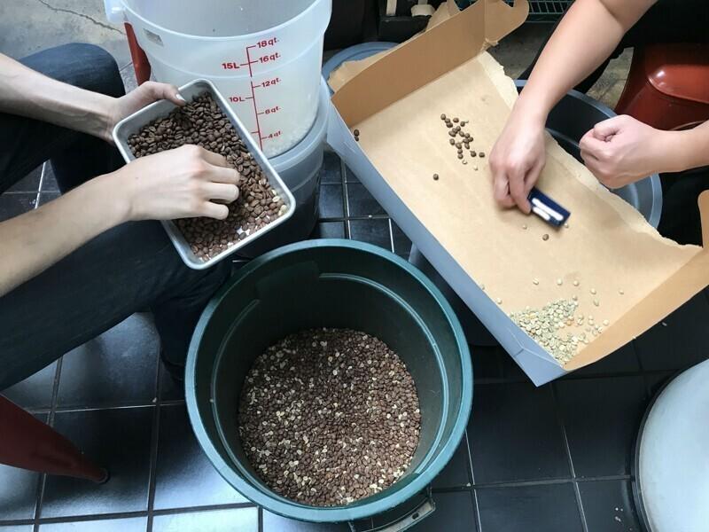 """""""Я работаю в кофейне. Босс случайно насыпал обжаренные зерна в необжаренные. Сидим, вручную сортируем 10 000 зерен"""""""