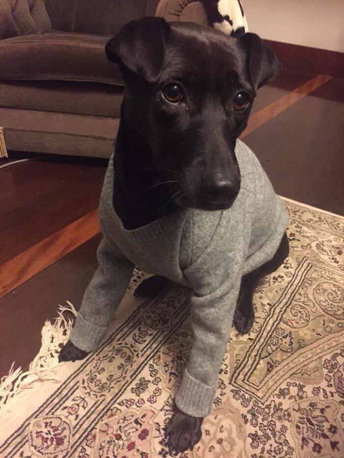 """4. """"Случайно постирал любимый свитер своей девушки. Ну ничего, кто-то потерял - кто-то приобрел"""""""