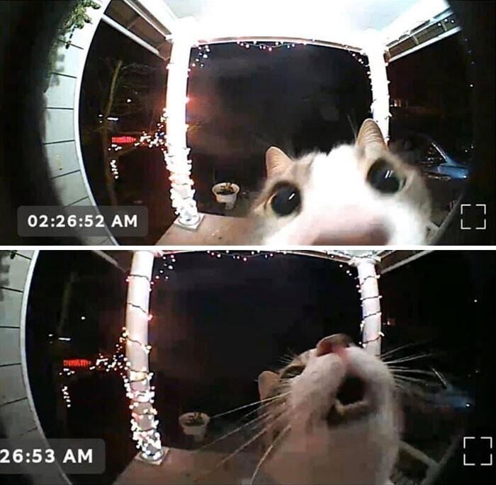 """""""Забыли кошку снаружи. Она включила камеру на звонке, чтобы ее заметили"""""""