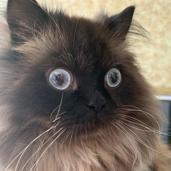 """""""Кажется, мой кот видел слишком много"""""""