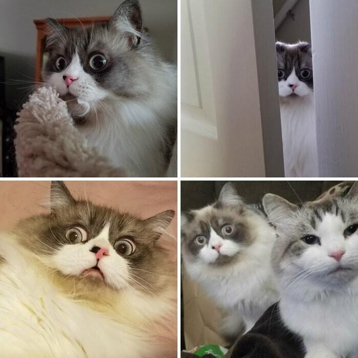 """""""Наш кот всегда выглядит гипер-тревожно"""""""