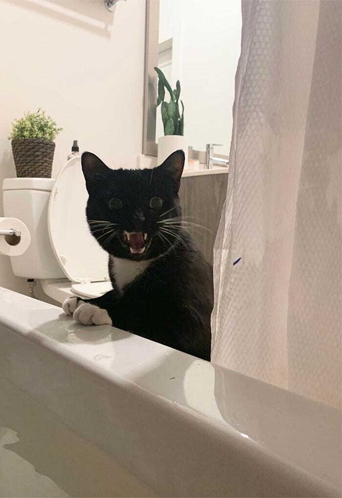 """""""Мой кот так волнуется за меня, когда я в ванной, что начинает кричать на всю квартиру"""""""