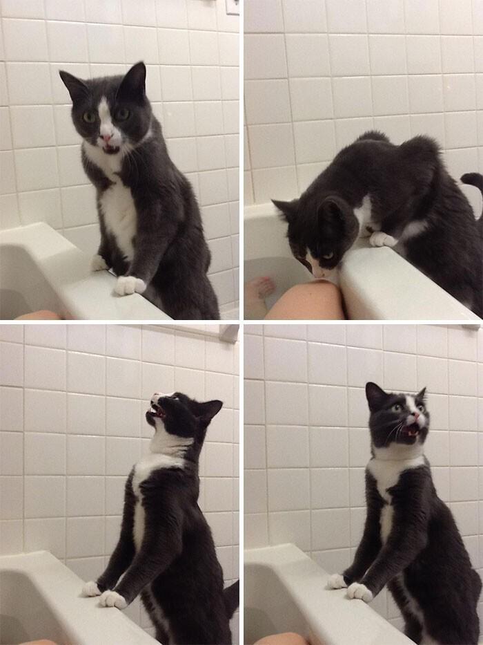 """""""Обычная реакция моего кота, когда я принимаю ванну"""""""