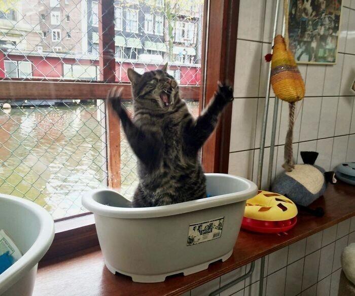 Котики с выдающимися актерскими способностями