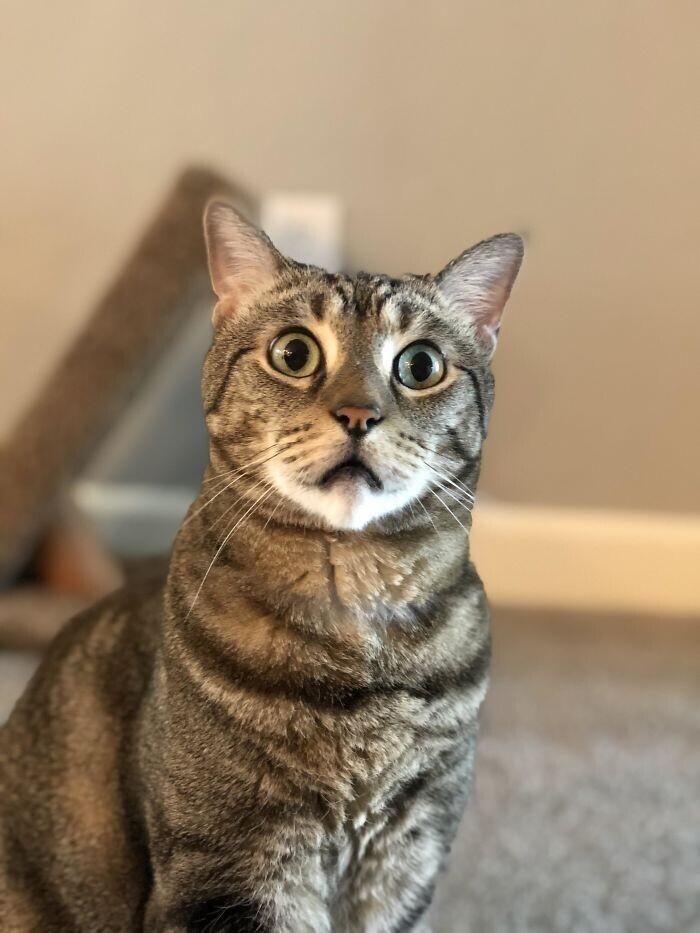 """""""Случайно включил новости на ТВ, и реакция моей кошки говорит обо всем.."""""""