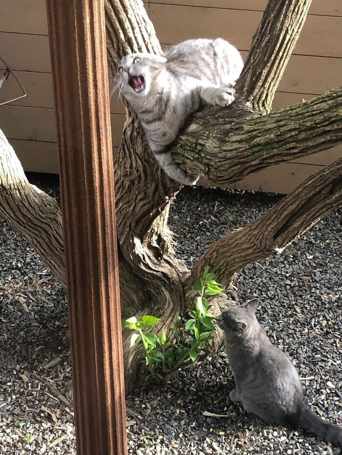 """""""А это я засняла в нашем дворе. У нас нет кошек"""""""
