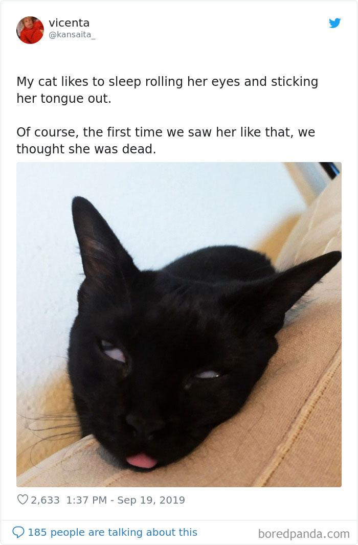 Кошка обожает спать в такой позе