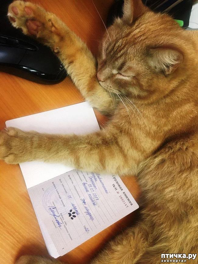 Этот обожает спать на трудовой книжке