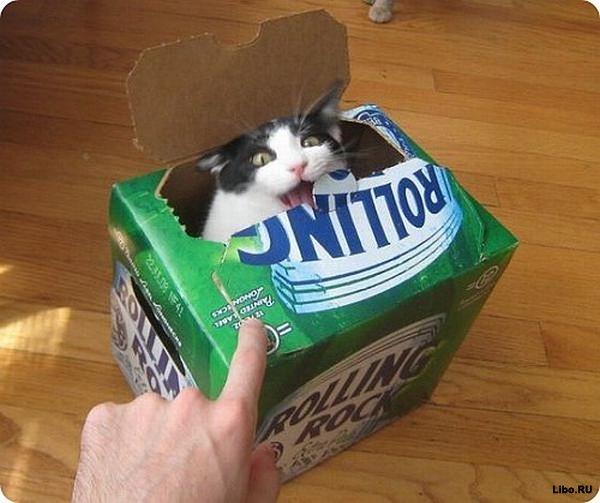 Кошачьи привычки, от которых животные получают удовольствие
