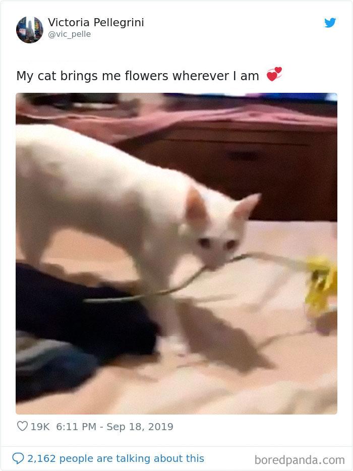 А этот кот дарит хозяйке цветы