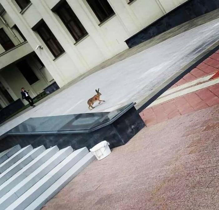 Неожиданно... зайчик на городской улице