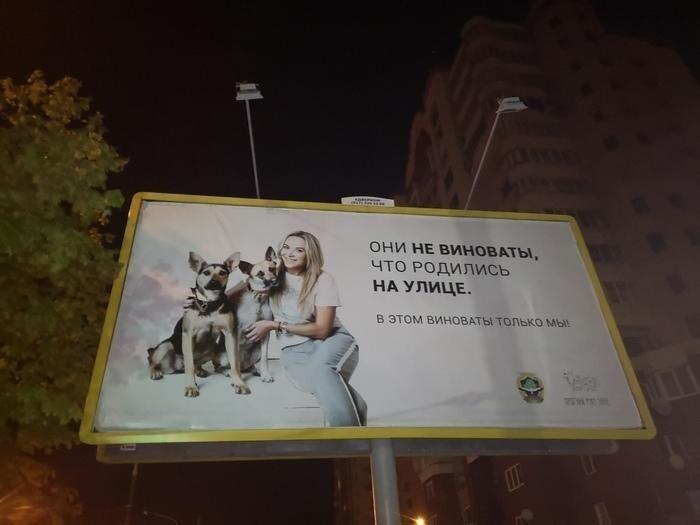 В Минске социальная реклама. Девушка не виновата, что родилась на улице. Бедная девушка )))