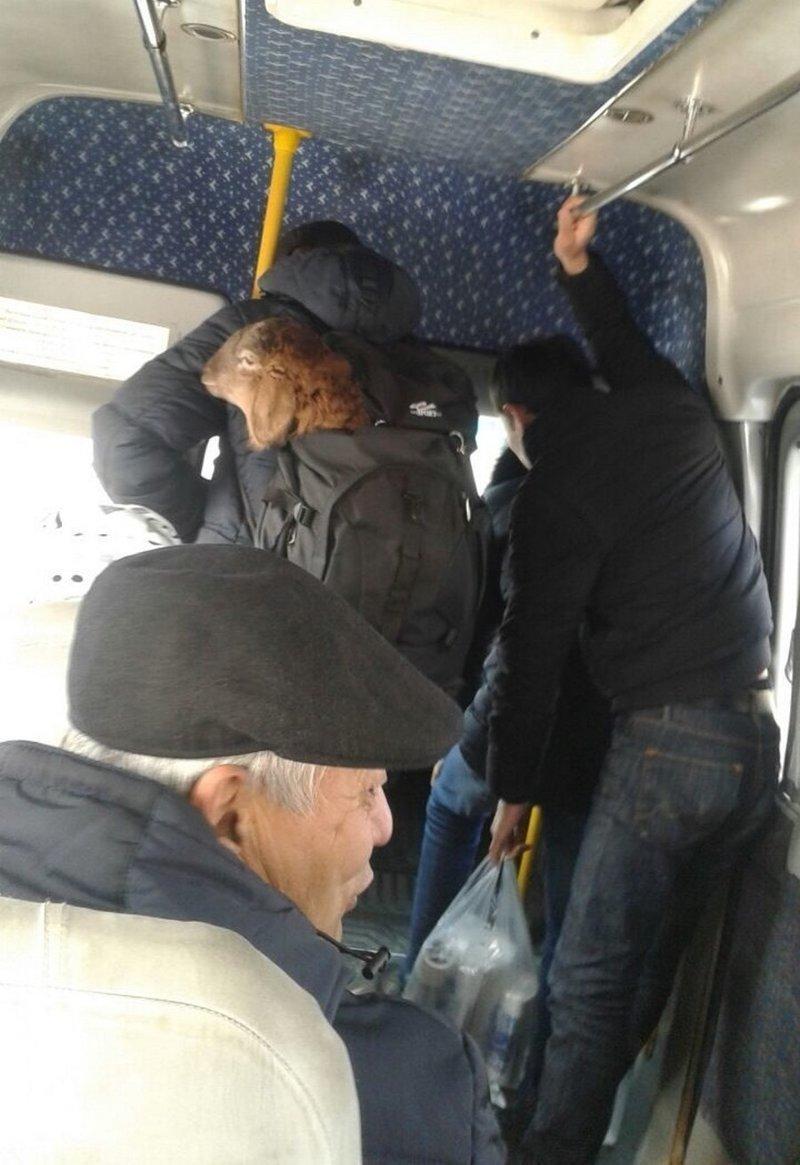 Не только люди катаются в автобусах