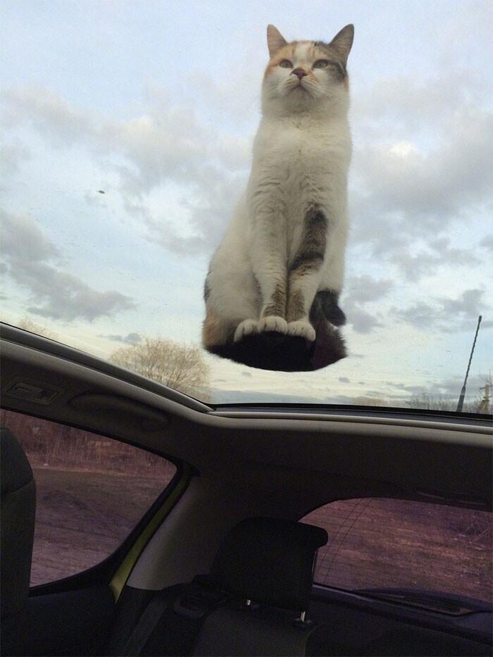 Котики - это не только жидкость, но и антигравитация