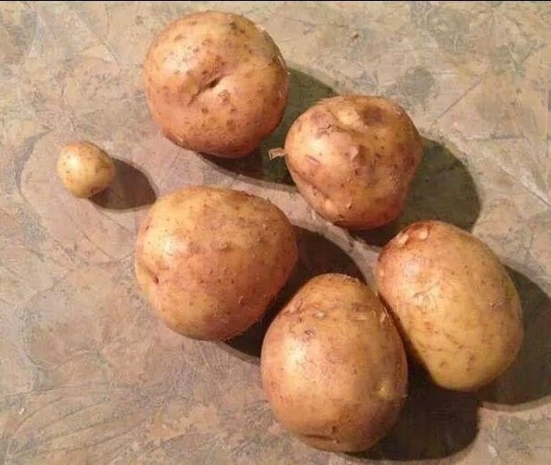 Он принёс ровно шесть картошек, как я и просила