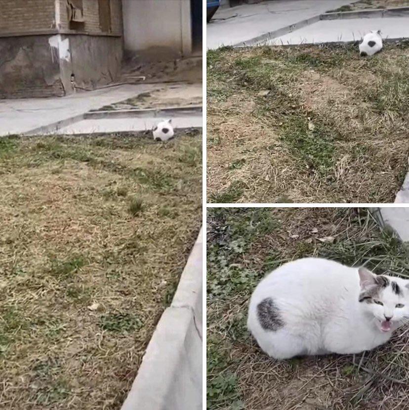 Мяч при повторном взгляде превратился в кота