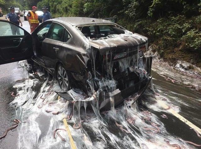 5 машин попало в ДТП с фурой, перевозившей склизких угрей