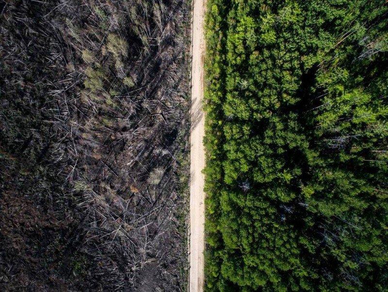 Дорога, которая остановила лесной пожар. Фотограф - Евгений Грин