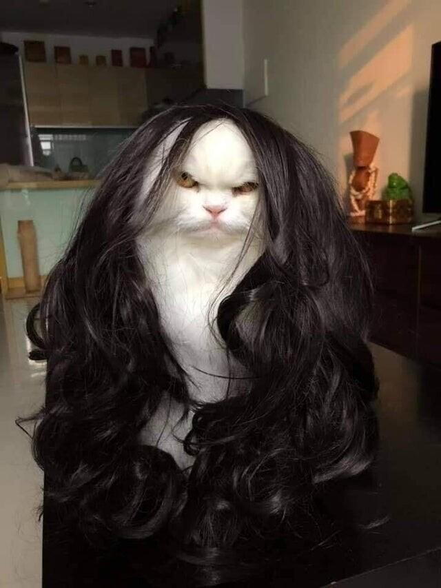 Примерил парик жены на кота. Одно лицо!