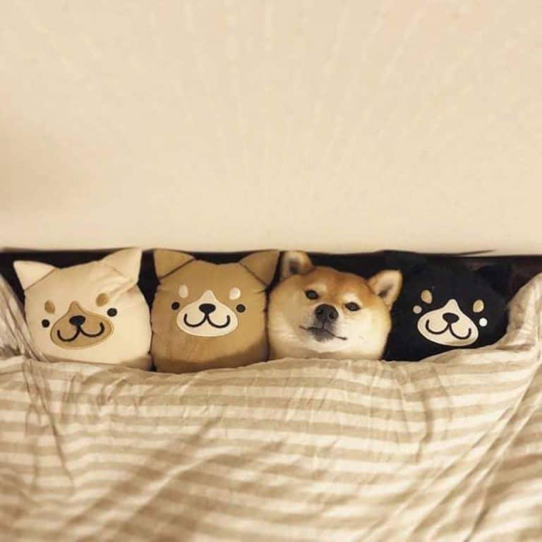 Где пес?