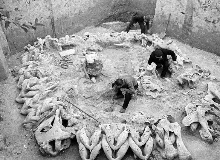 Остатки древнейшего известного поселения, построенного человеком из костей мамонта и насчитывающего более 15 000 лет, были найдены в селе Межирич (Украина)