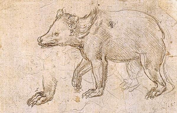 Леонардо да Винчи покупал на рынке животных в клетках, просто чтобы освободить их