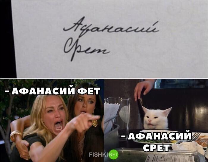 Какими бы хорошими ни были собаки, лучшие мемы получаются с котиками.