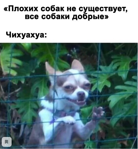 Плохих собак вообще не существует, есть только плохие хозяева и чихуахуа.