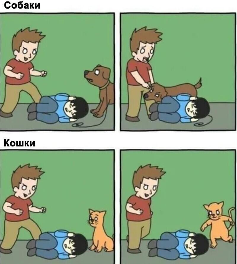 Пёс всегда защитит своего хозяина.