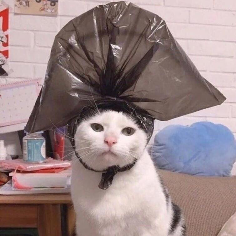 А ещё кошкам нет равных в фотогеничности.