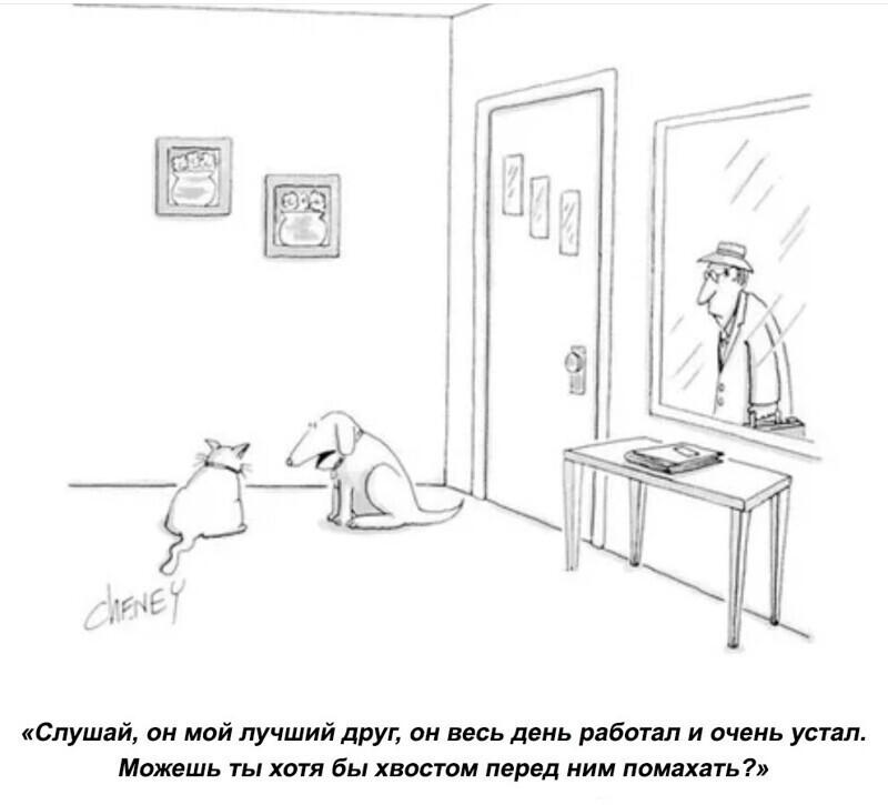 Собаки всегда рады приходу хозяина.