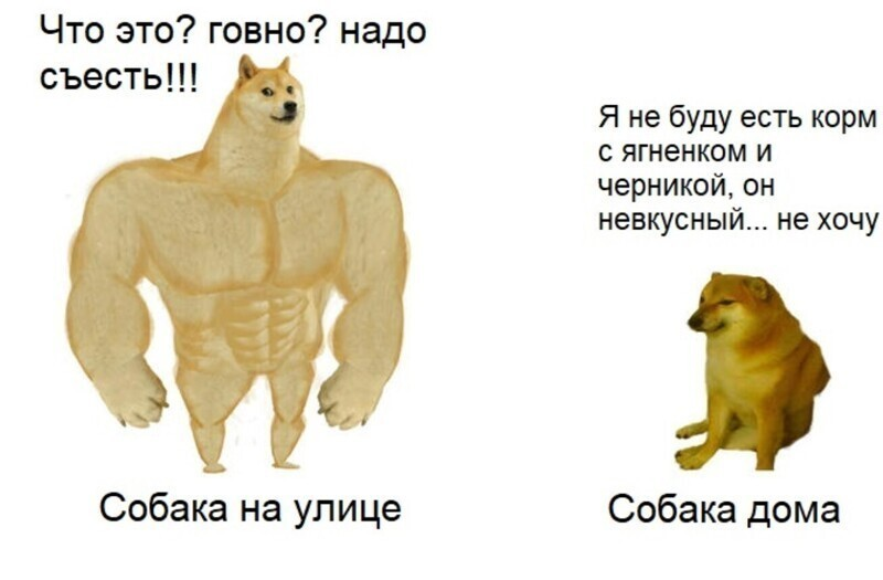 У собак весьма специфические предпочтения в еде.