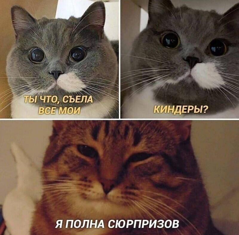 Песики или котики