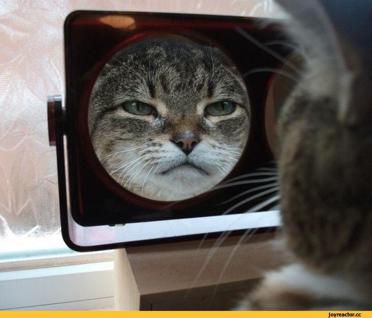Домашние питомцы, недоумевающие от собственного отражения в зеркале