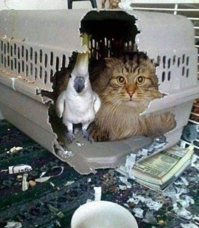 Свободу попугаям и котам!